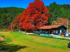 Passeio Parque Estadual / Trilhas, Flores e Muita Natureza