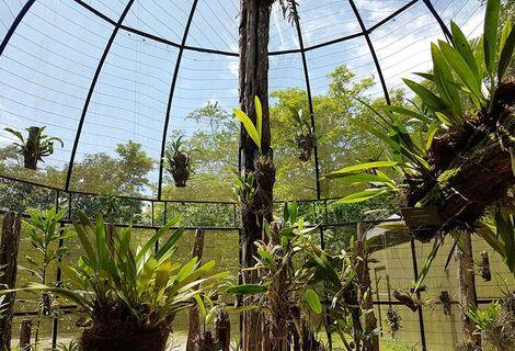 Passeio Tour Musa - Museu da Amazônia